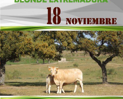 I Concurso Extremadura Blonde Aquitania
